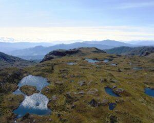 Paramo habitat of the Blue-throated Hillstar © NCE