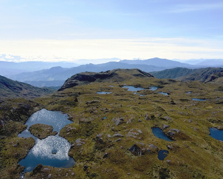 Paramo habitat of the Blue-throated Hillstar © NCE