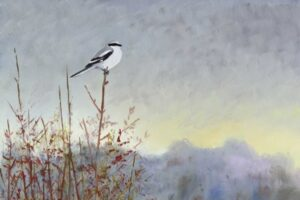 Great Grey Shrike by Martin Woodcock