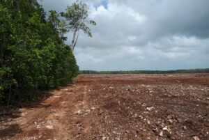Deforestation in Belize. Image: CSFI