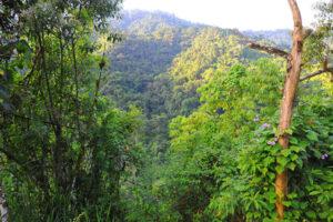 Buenaventura Reserve. Image: Andrew Smiley