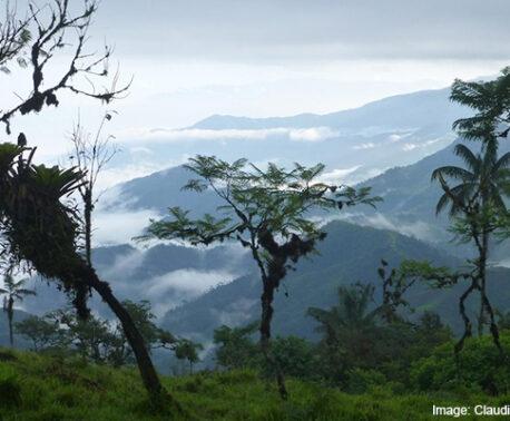 Buenaventura Cloud Forest. Image: Claudia Hermes