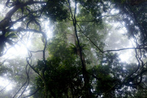 Tropical rainforest Borneo