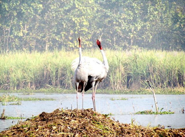 © Samir Kumar Sinha/WTI