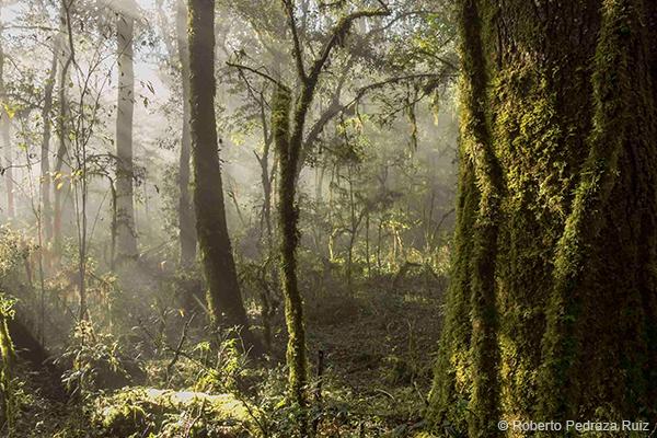 Misty Forest, Roberto Pedraza Ruiz