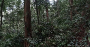 Saola Habitat / Viet Nature