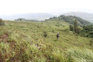Invasive grasses cover the project area