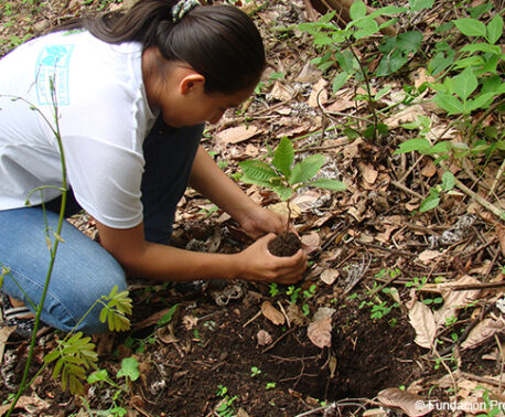 Tree planting in Cerro Blanco