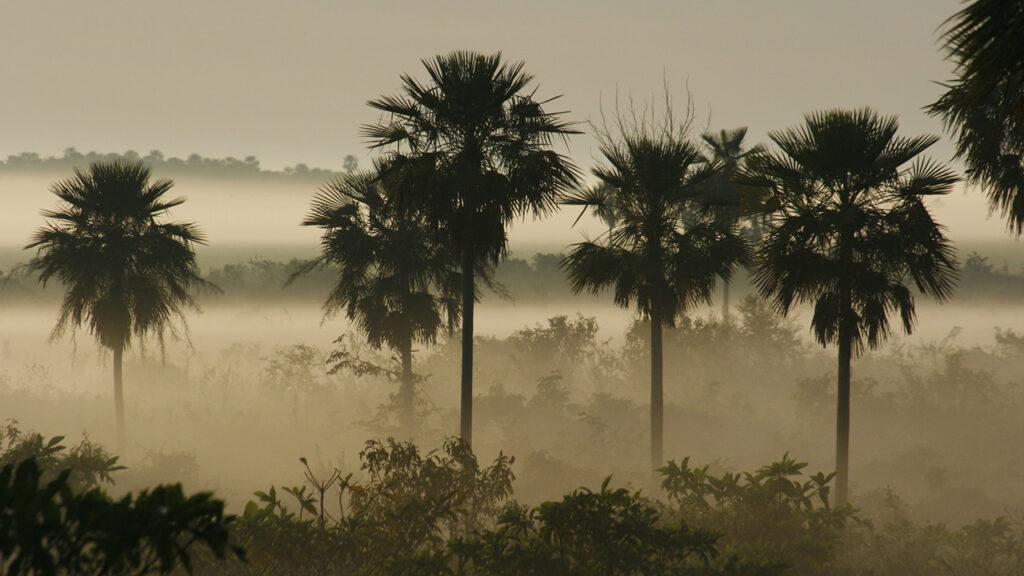 Pantanal © Jose Luis Cartes