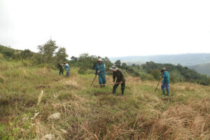 WLT Partner organisation, Viet Nature needs to clear this grass before tree planting can take place. Image: Viet Nature