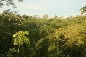 El Silencio ©Fundacion Biodiversida Colombia