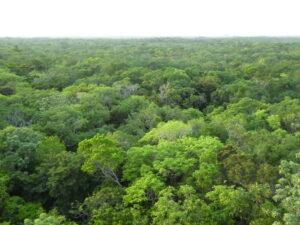 North-Eastern Biological Corridor, WLT/Richard Cuthbert