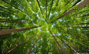 Forest Canopy © Roberto Pedraza Ruiz