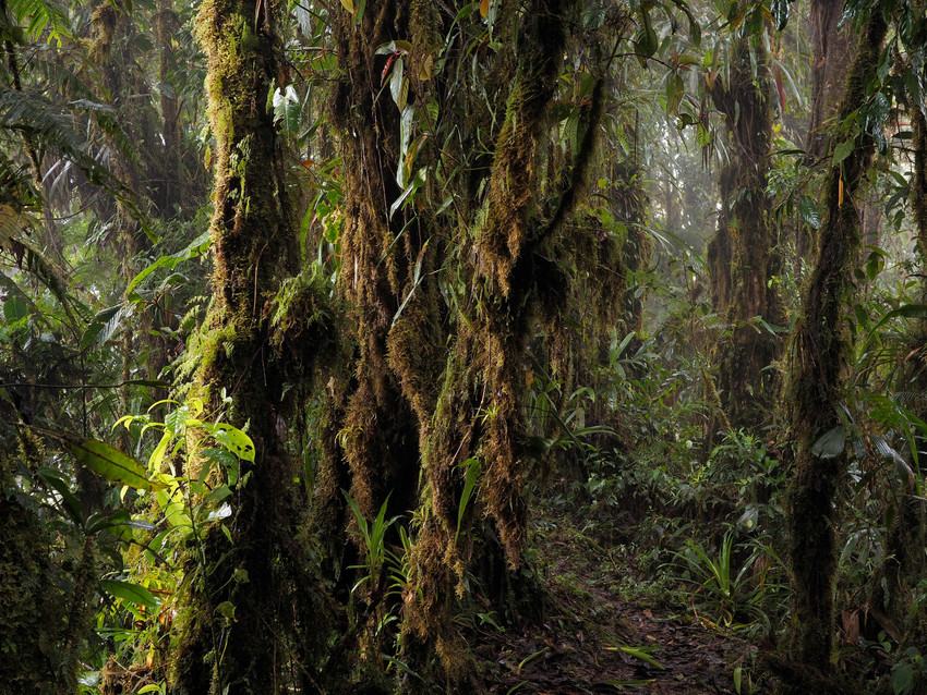 Cloud Forest/Rio Zunac ©Lou Jost/EcoMinga