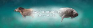 Barbacoas banner