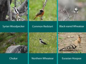 CWR Birds ©Boris Vanyan:FPWC