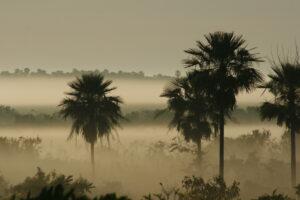 Chaco-Pantanal©Guyra Paraguay/Jose Luis Cartes