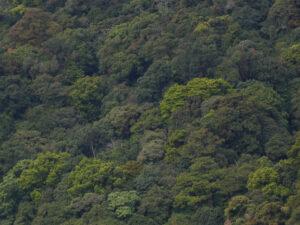 Garo Hills corridor ©Richard Cuthbert/WLT