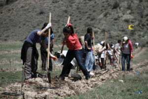Tree planting in Armenia. © FPWC