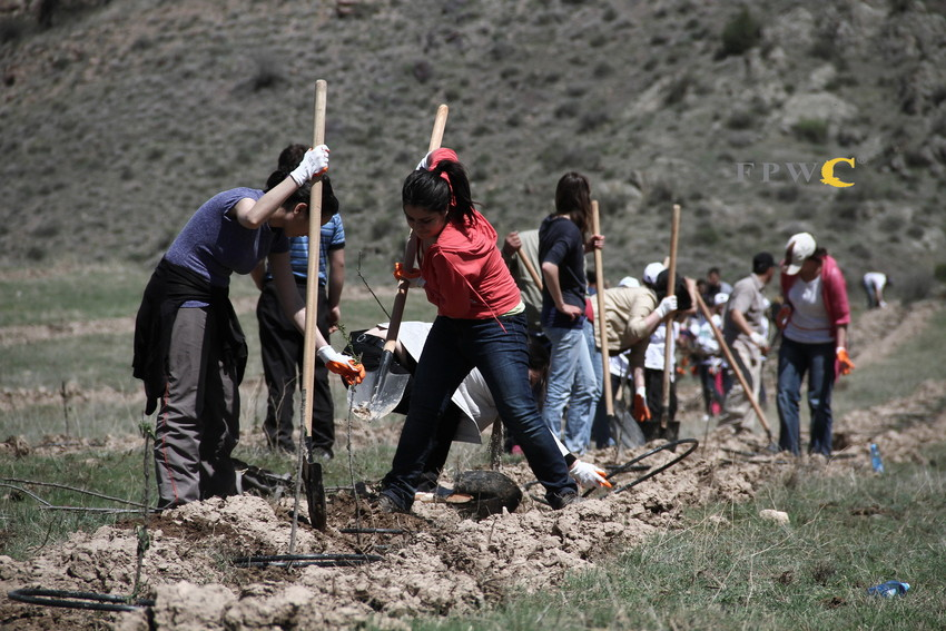 Tree planting in Armenia. © FPWC