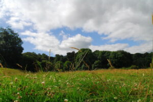 Kites Hill Reserve. Credit: Claire Whittenbury