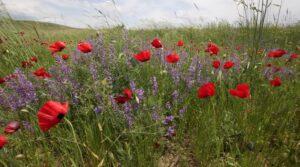 Flowers in Caucasus Wildlife Refuge © David Bebber