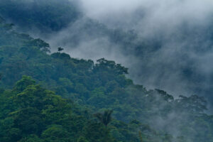 View of cloud forest at Buenaventura reserve, Ecuador. ©Lucas_Bustamante
