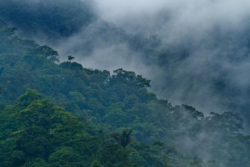 View of cloud forest at Buenaventura reserve, Ecuador. ©Lucas_Bustamante