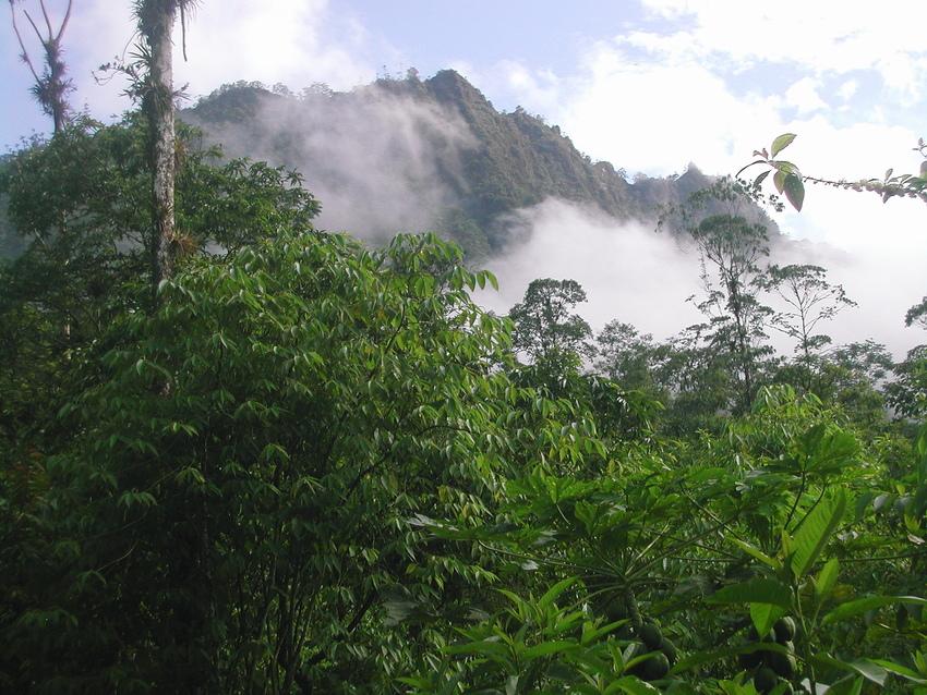 View of Buenaventura Reserve, Ecuador. © Nigel Simpson