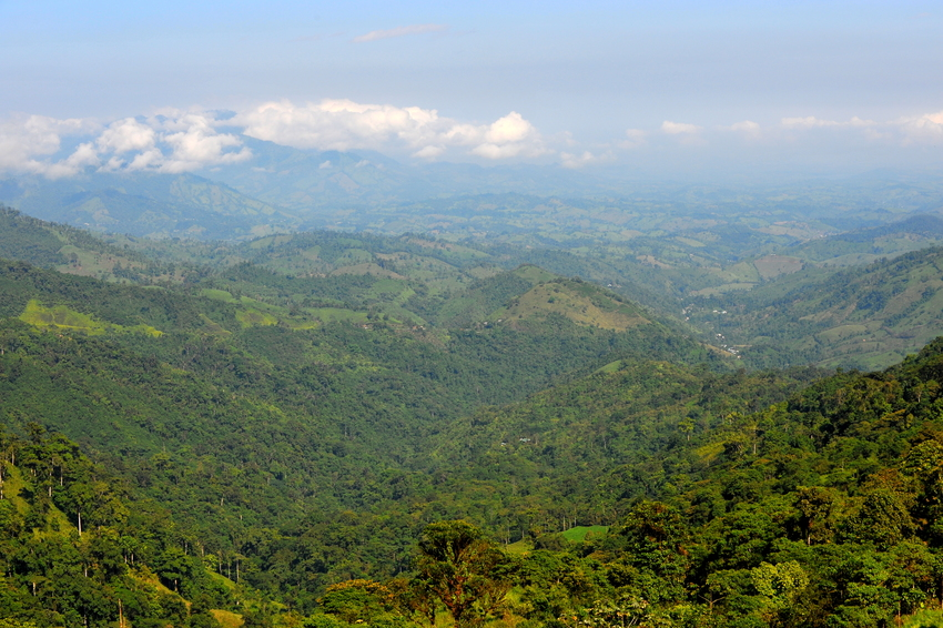 A view of Buenaventura Reserve, Ecuador ©Andrew Smiley