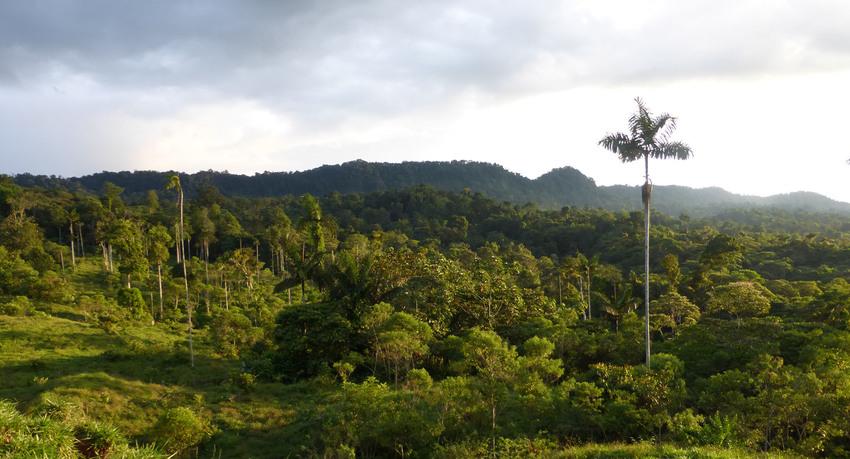 A view of Rio Canande Reserve, Ecuador © Nigel Simpson