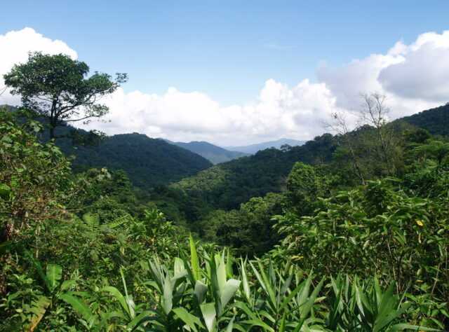 Khe Nuoc Trong, Carbon Balanced Reserve, Vietnam. Credit: WLT/Natalie Singleton