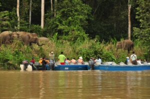 Tourists in boats, viewing Bornean Elephants from close proximity. Credit: HUTAN.