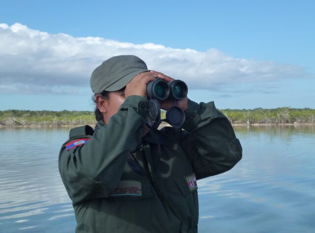CSFI ranger in Belize, looking through binoculars