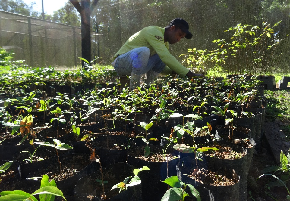 Mauricio tending to saplings in the tree nursery at REGUA, Brazil.