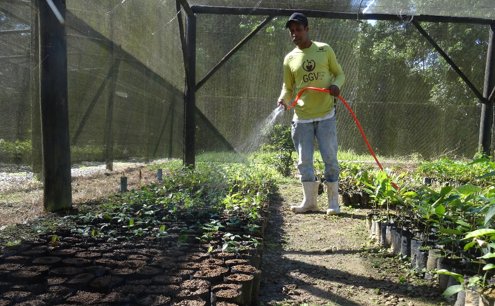 Mauricio watering saplings in the tree nursery at REGUA, Brazil.