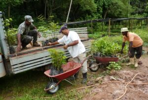 Workers loading saplings onto a flat-bed truck, ready for transportation to planting area.