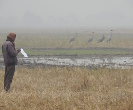 A fieldworker monitoring Sarus Crane in India.