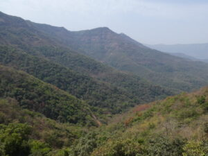 Western Ghats, India. Image credit: WLT/Richard Cuthbert.