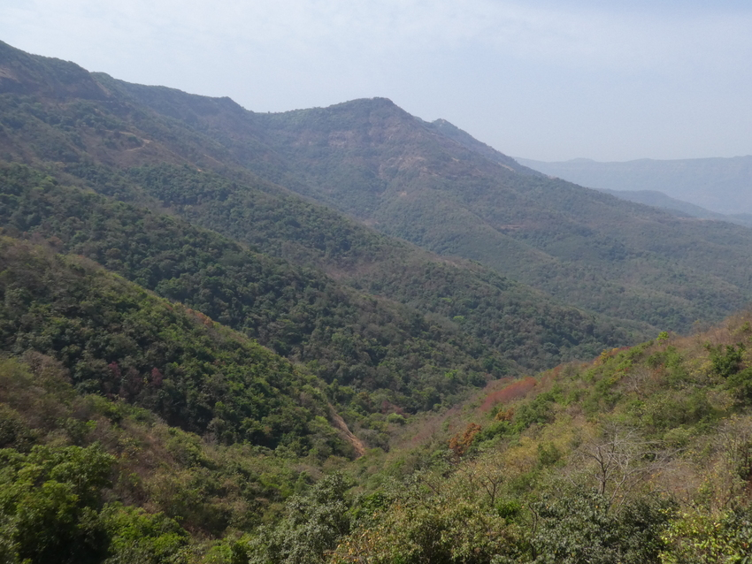 Western Ghats, India. Image credit: WLT/Richard Cuthbert.