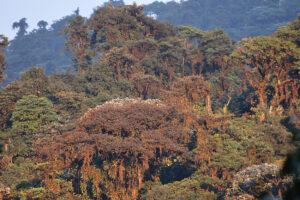 Manduriacu Reserve. Image credit: Sebastian Kohn.