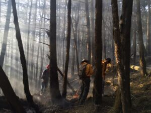 Firefighters tackling a blaze in the pine forests of Sierra Gorda ©GESG