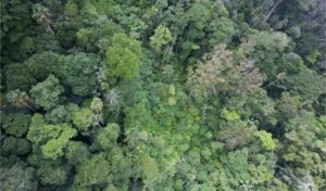 Sierra caral from the air Image credit: IUCN Netherlands.
