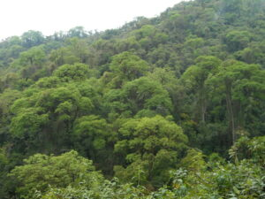 A view of mature forest at El Pantanoso