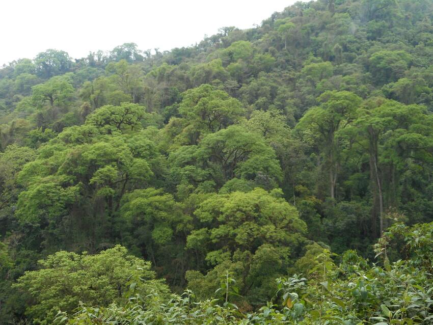 A view of mature forest at El Pantanoso