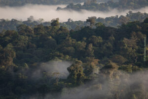 Choco Forest, Canande, Ecuador ©Fundacion Jocotoco