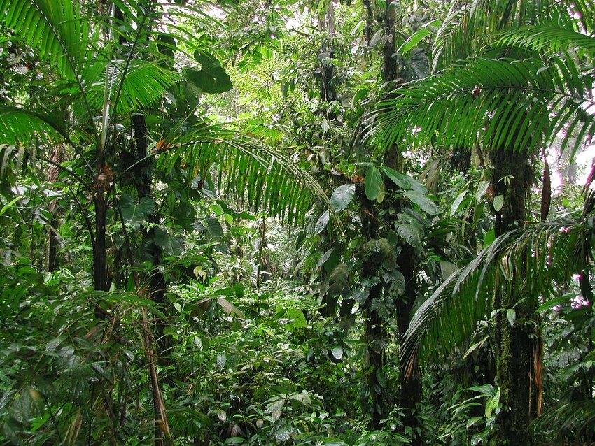 Lowland forest at Canande, Ecuador. ©Nigel Simpson