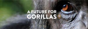 A Future for Gorillas
