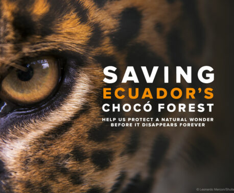 Saving Ecuador's Chocó Forest