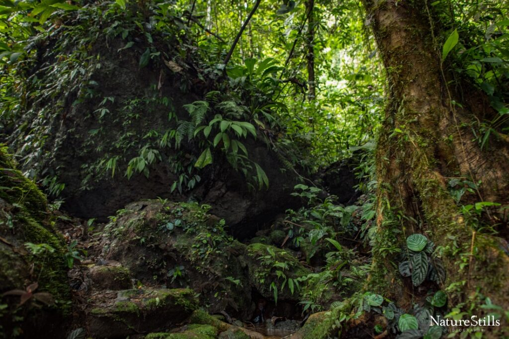 A view of Chocó forest in Canandé reserve, Ecuador.